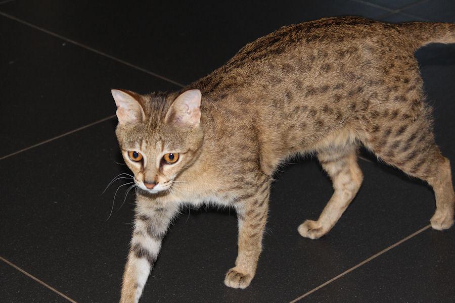 Savannah Kat Chloe 3