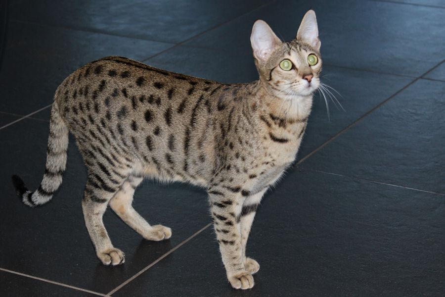 Savannah Kat Catelaya 1